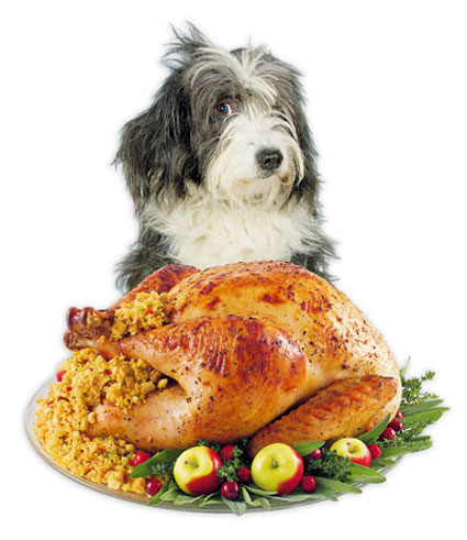Holiday safety for dogs
