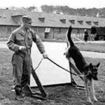 Dogs for Defensetraining