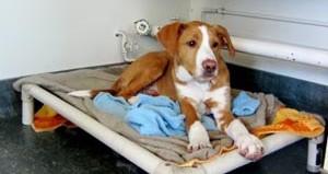 Kuranda bed for shelter dogs