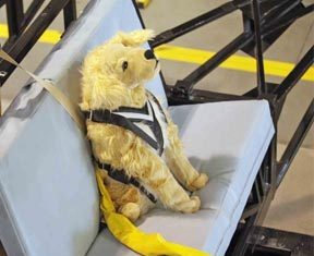 crash test dog dummy