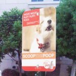 REsponsibledog owners pick up poop