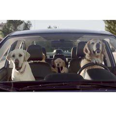 Barkley family by Subaru