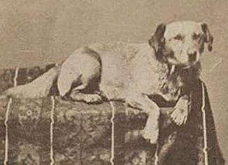 President-Lincoln-dog