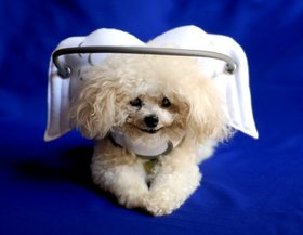 Muffins-Halo-for-blind-dogs