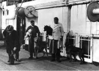 Dogs on board the Titanic