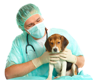 Veterinarian – Animal Clinic – Pet Hospital