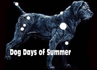 The-dog-days-of-summer