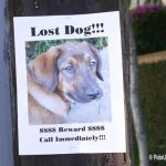 Lost-dog-poster