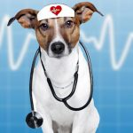 Dogs and human health