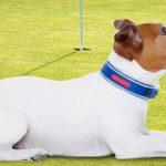 Pasadena Humane Society Golf Tournament