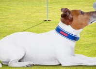 Pasadena Humane Society Golf Tournament