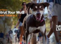 Strut-your-mutt-LA