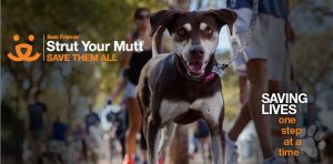 Strut Your Mutt @ Exposition Park | Los Angeles | California | United States