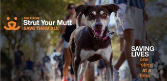 Strut-your-mutt-LA