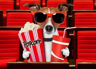 Dog-friendly-movie-screenings