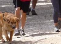 Fundraising dog walk