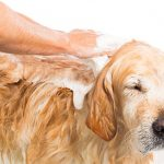 Dog Wash Benefit