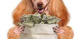Pet spending