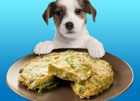 Quiche for dogs