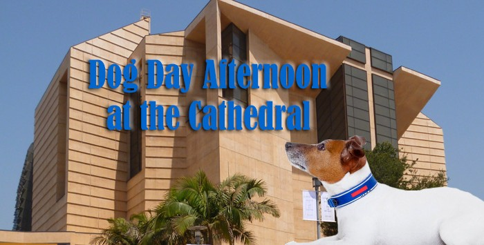 Dog Day Afternoon at the Cathedral
