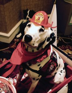 Fire dog at BlogPaws 2015