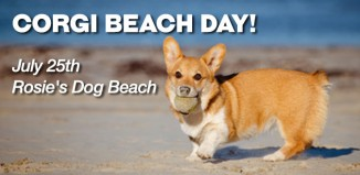 So Cal Corgi Beach Day