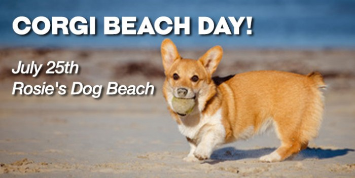 So Cal Corgi Beach Day