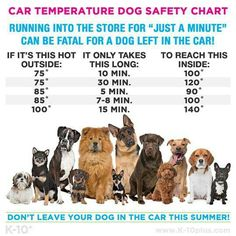 Dogs and heat in cars