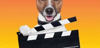 Casting call for rescued dogs