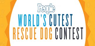 Cutest-rescue-dog-contest