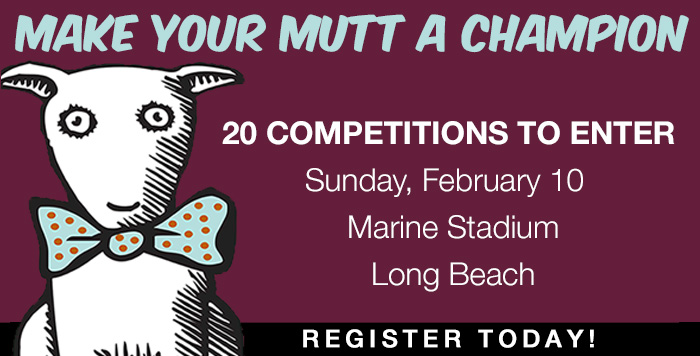 Haute-dog-competitions