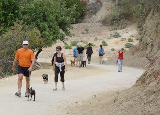 Dog-Parks-in-LA