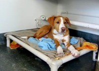 Kuranda bed for shelter dogs
