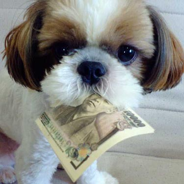Charity dollars for dogs