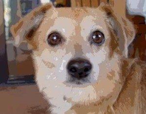 death of a dog
