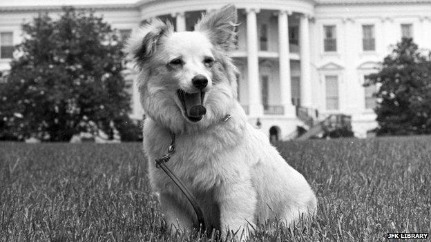 Pushinka-Kennedy-White-House