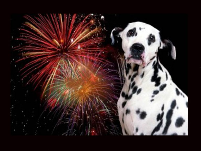 How can I keep my dog safe this July 4?