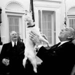 Presidential-dogs-LBJ-Yuki