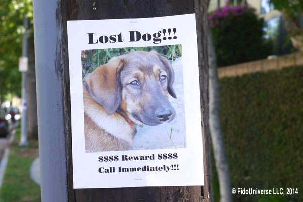 How can I find my lost dog?
