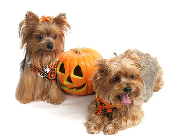 4 tips for dog Halloween costumes