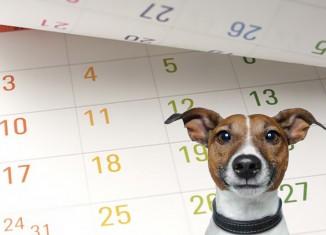 Dog-health-calendar