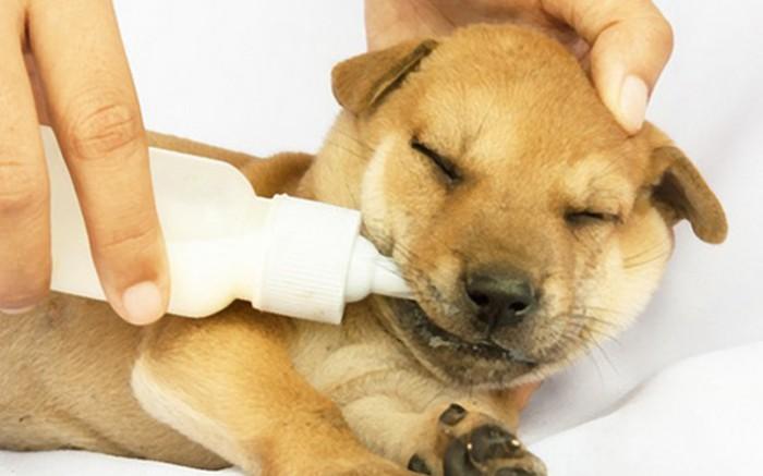Dog fostering