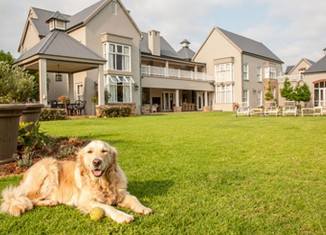 Landscaping for dogs