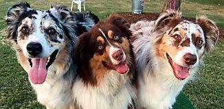 Sepulveda-Basin-Off-Leash-Dog-Park-Photo-Contest